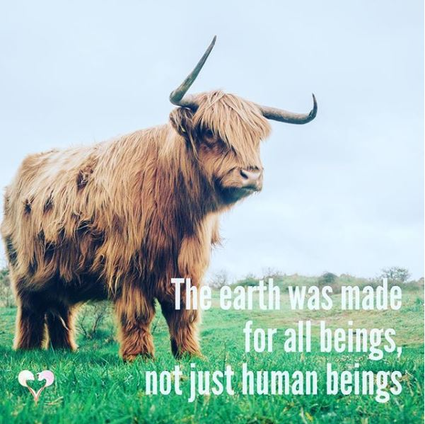 Loveland Farm Sanctuary Quote