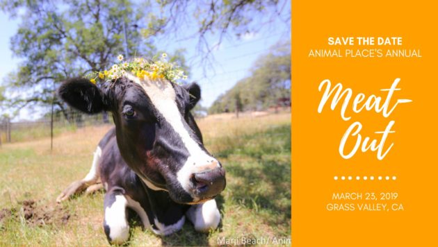 A cow in the grass, text: Meat Out Event March 23