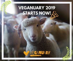Sheep with Veganuary